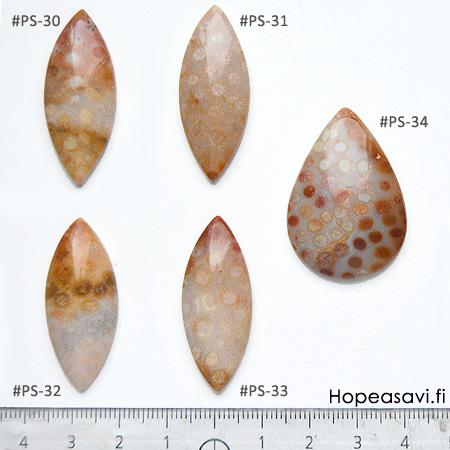 Fossiili koralli, pyöröhiottu kapussi, pisara, noin 37x27x5.9mm, kuvassa #PS-34, tasainen tausta, vain 1 kpl
