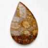 Fossiili koralli, pyöröhiottu kapussi, pisara, noin 31.5x20.4x5.2mm, kuvassa #PS-103, tasainen tausta, uniikki kivi