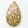 Fossiili koralli, pyöröhiottu kapussi, pisara, noin 17.2x29x5.4mm, kuvassa #PS-18, tasainen tausta, vain 1 kpl