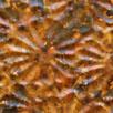 Kuparilevy, patinoitu, kuvioitu kukka, ANTIIKKI -kuvio, noin 70x70mm, paksuus 0.15mm, pehmeä, uniikki kuvio